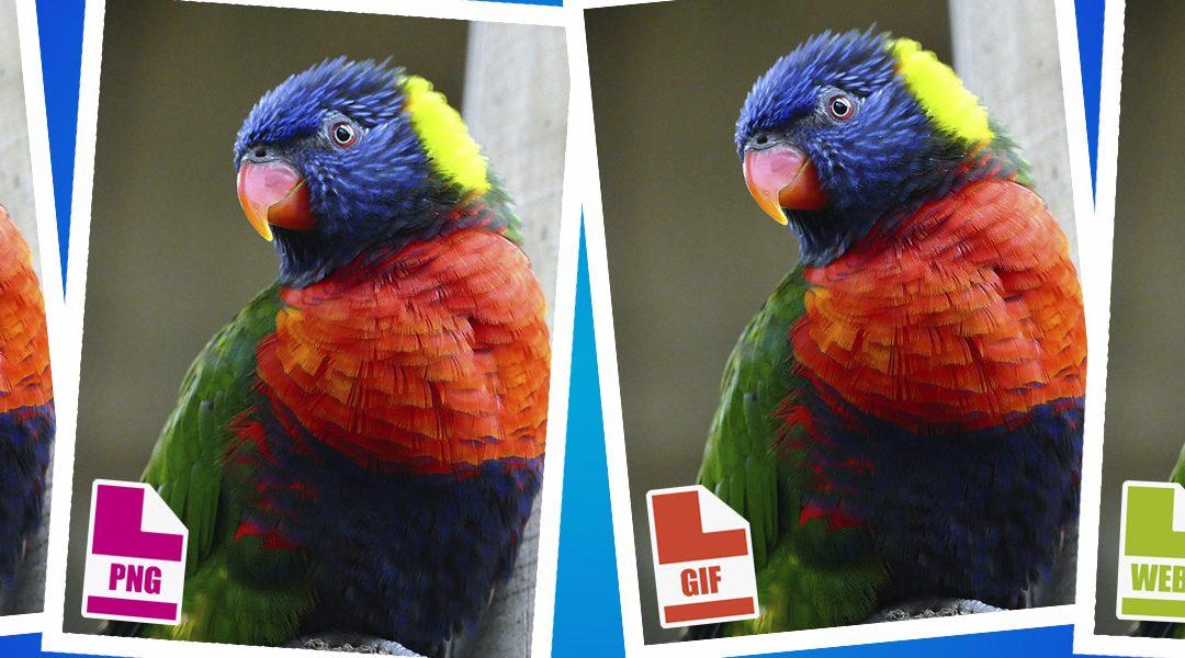Rätt filformat för bilder på din webbplats